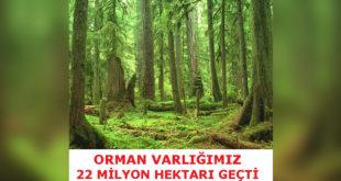 Orman Varlığımız Arttı